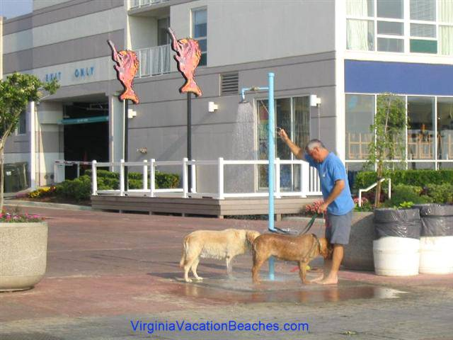 Are Dogs Allowed On Virginia Beach Boardwalk